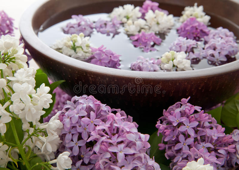 ύδωρ βράχων λουλουδιών στοκ εικόνες