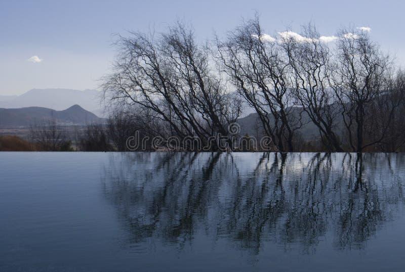 ύδωρ δέντρων αντανάκλασης στοκ φωτογραφίες με δικαίωμα ελεύθερης χρήσης