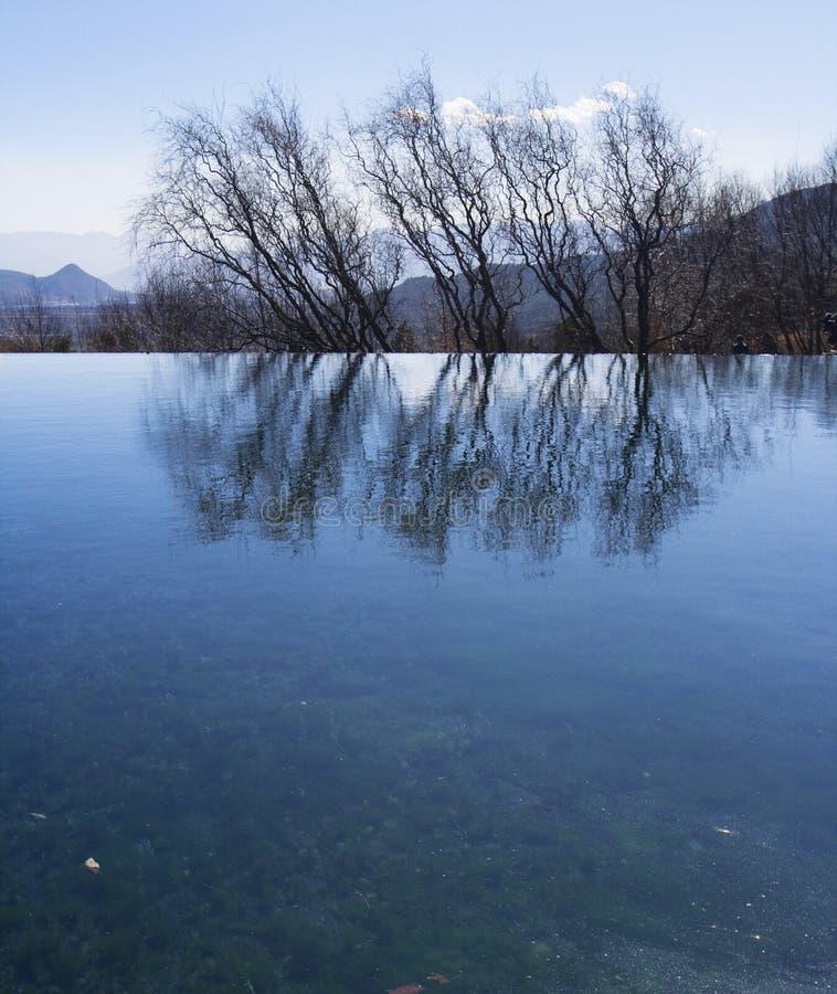 ύδωρ δέντρων αντανάκλασης στοκ εικόνες με δικαίωμα ελεύθερης χρήσης