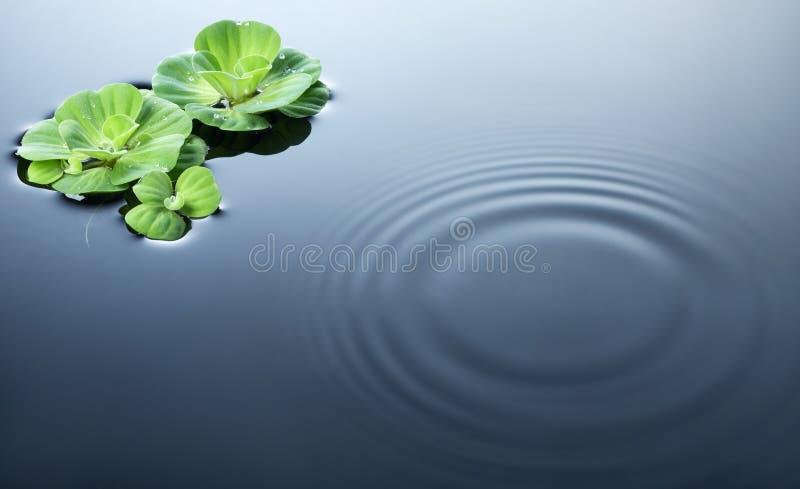 ύδωρ κυματώσεων φυτών στοκ φωτογραφία με δικαίωμα ελεύθερης χρήσης