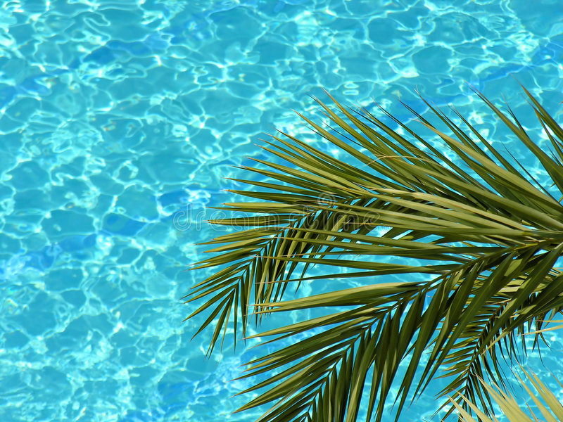 ύδωρ λιμνών φοινικών στοκ φωτογραφία με δικαίωμα ελεύθερης χρήσης