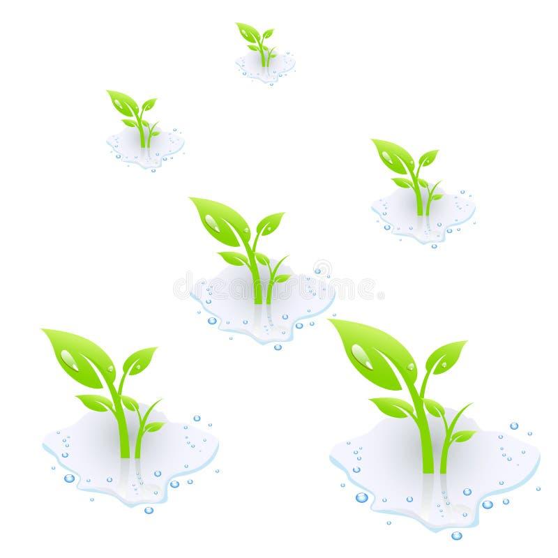 ύδωρ φυτών ελεύθερη απεικόνιση δικαιώματος