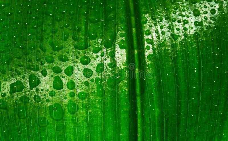 ύδωρ φύλλων απελευθερώσ στοκ φωτογραφία με δικαίωμα ελεύθερης χρήσης
