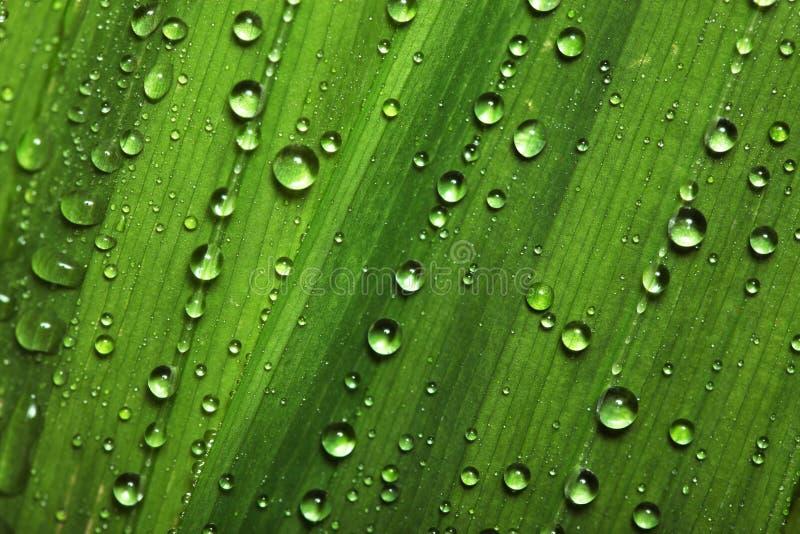 ύδωρ φύλλων απελευθερώσ στοκ εικόνες με δικαίωμα ελεύθερης χρήσης