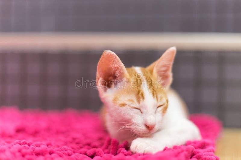 Ύπνοι γατών στον τάπητα στοκ φωτογραφία με δικαίωμα ελεύθερης χρήσης