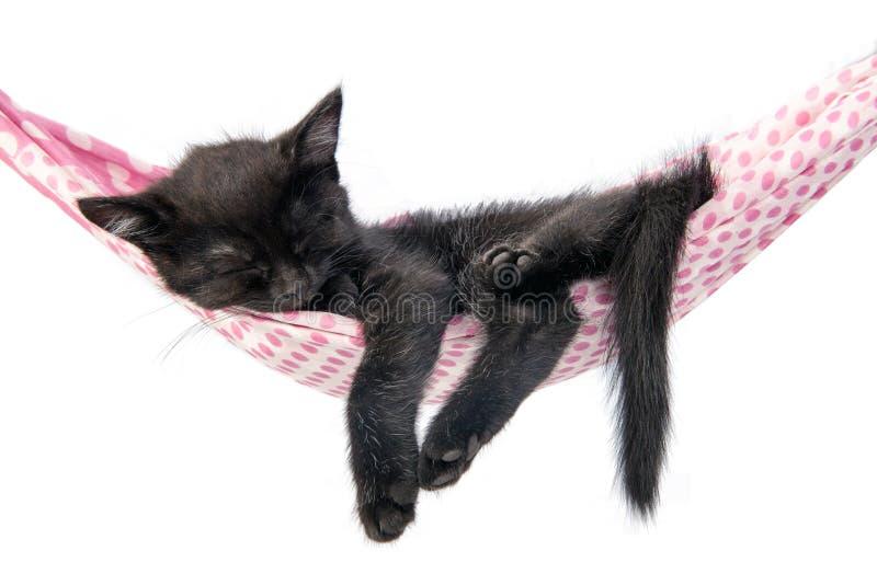 Ύπνοι λίγων γατακιών σε ένα coverlet Μικροί ύπνοι γατών γλυκά όπως στοκ εικόνα