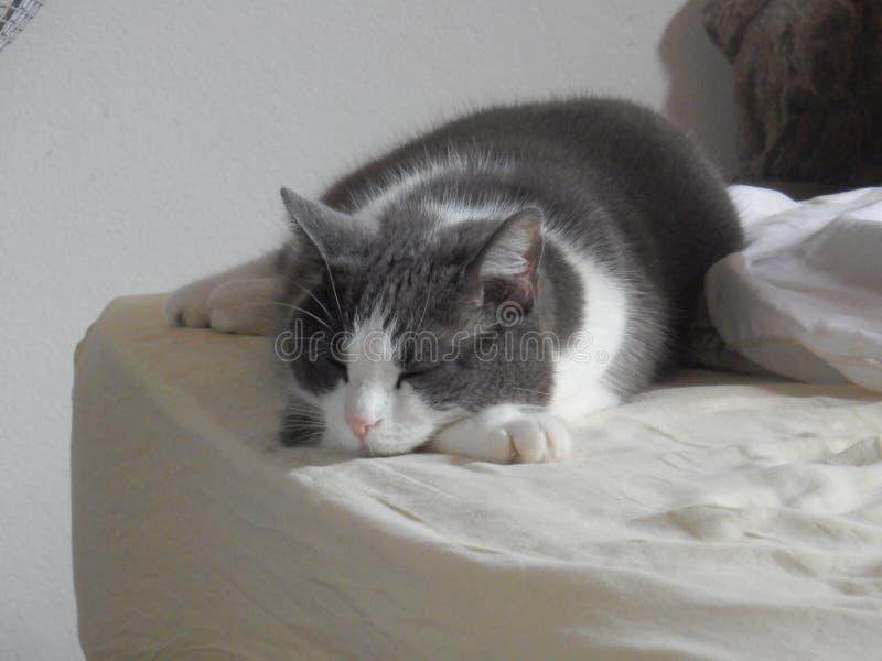 Ύπνοι νέοι γατών στο κρεβάτι στοκ φωτογραφίες με δικαίωμα ελεύθερης χρήσης