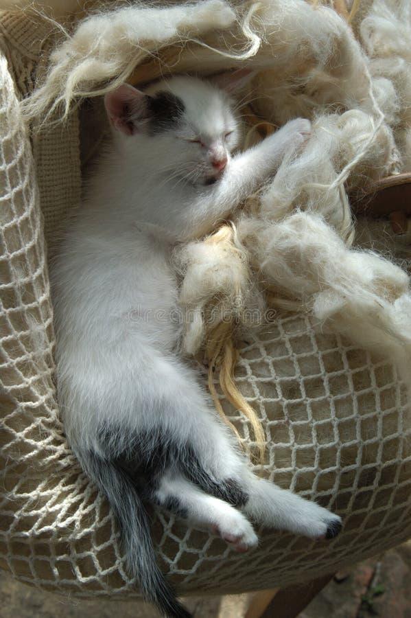 Ύπνος γατακιών στην τσάντα του μαλλιού στοκ φωτογραφίες