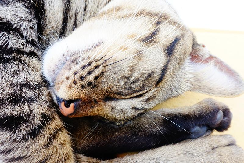Ύπνος γατών καλά στοκ εικόνες