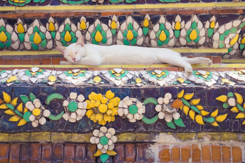 Ύπνος γατών στην παγόδα στο βουδιστικό ναό στην Ταϊλάνδη στοκ εικόνα