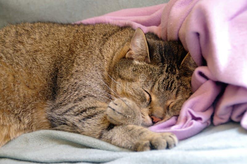 Ύπνος γατών στο coverlet στοκ φωτογραφία με δικαίωμα ελεύθερης χρήσης