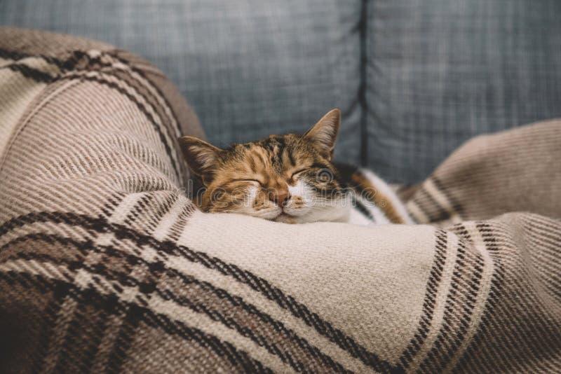 Ύπνος γατών συνθήματος στο κάλυμμα στοκ φωτογραφίες με δικαίωμα ελεύθερης χρήσης