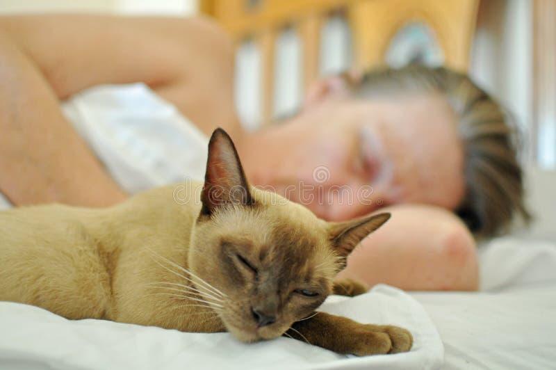 Ύπνος γατών της Pet στο κρεβάτι με την ώριμη ηλικιωμένη γυναίκα στοκ φωτογραφία