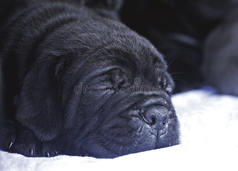 Ύπνος κουταβιών στοκ φωτογραφία