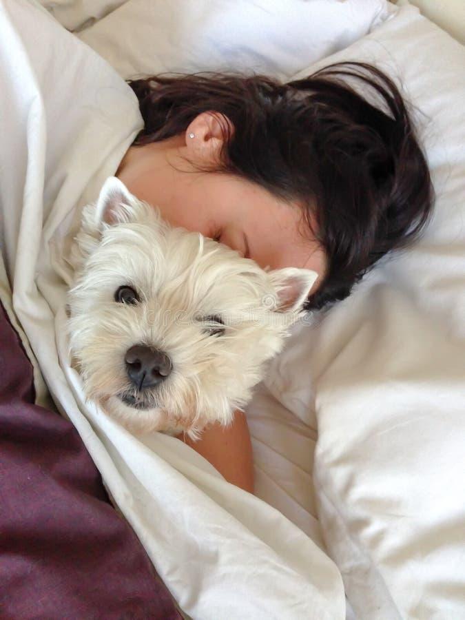 Ύπνος με τα κατοικίδια ζώα: αγκαλιάζοντας τεριέ δυτικών ορεινών περιοχών γυναικών westie στοκ εικόνα