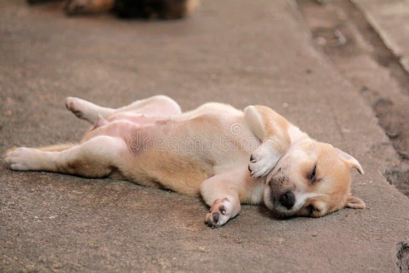 Ύπνος περιπλανώμενων σκυλιών ευτυχώς μόνος, περιμένοντας το παλάτι για να βρεί τα καλά πράγματα στη ζωή στοκ εικόνες