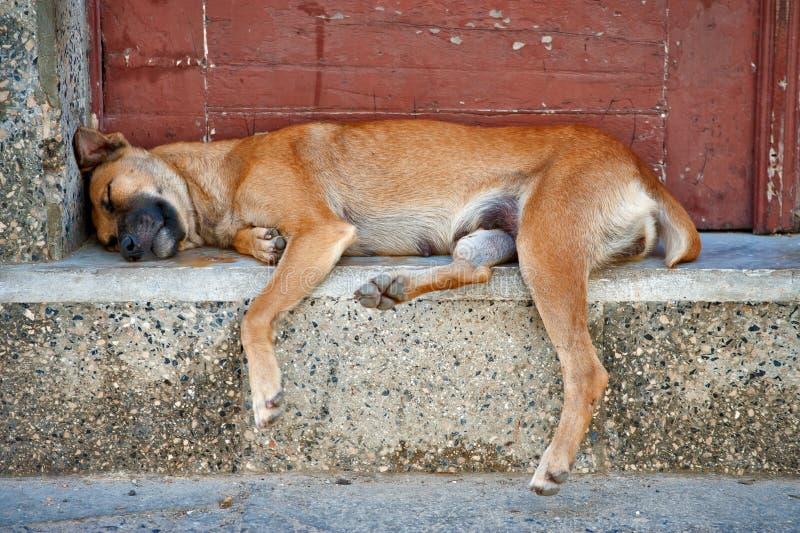 Ύπνος περιπλανώμενων σκυλιών στις οδούς της Αβάνας στοκ φωτογραφία