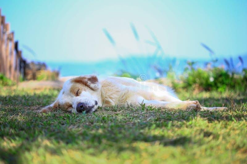 Ύπνος σκυλιών καλά στη φύση στοκ φωτογραφία