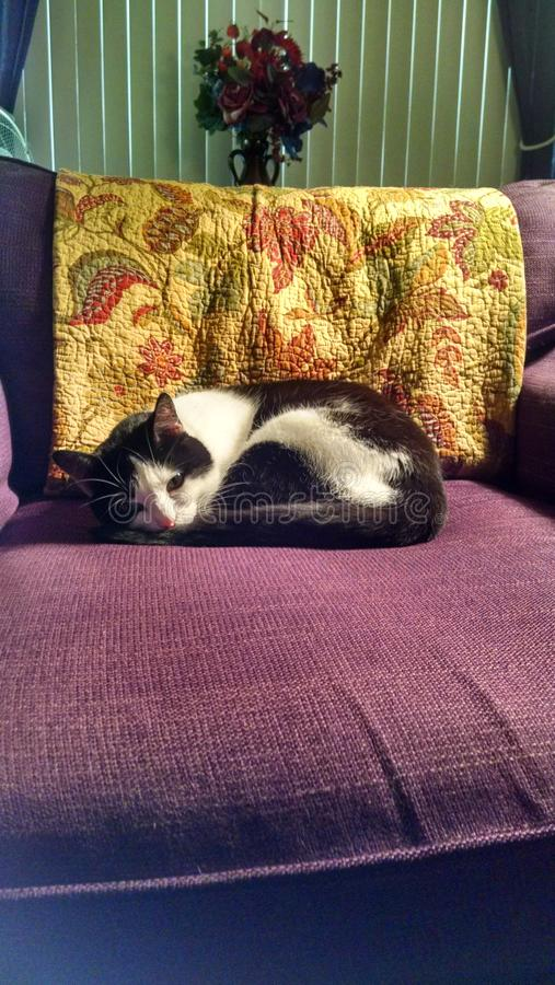 Ύπνος Shiloh στοκ φωτογραφία με δικαίωμα ελεύθερης χρήσης