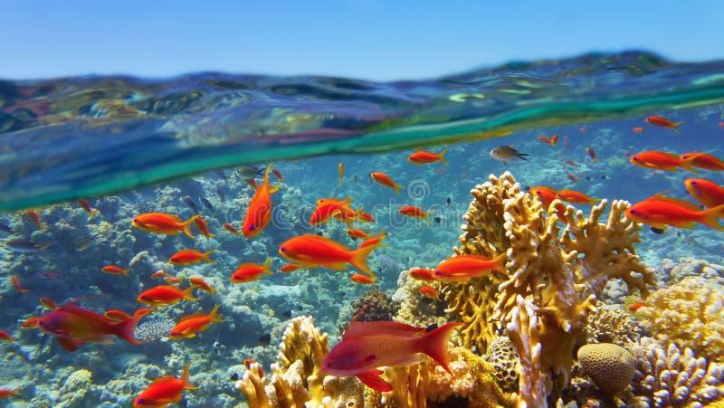 Ύφαλος που αντιμετωπίζεται κοραλλιογενής από την επιφάνεια θάλασσας στοκ εικόνες