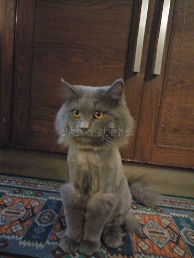 Ύφος τρίχας γατών στοκ φωτογραφία με δικαίωμα ελεύθερης χρήσης