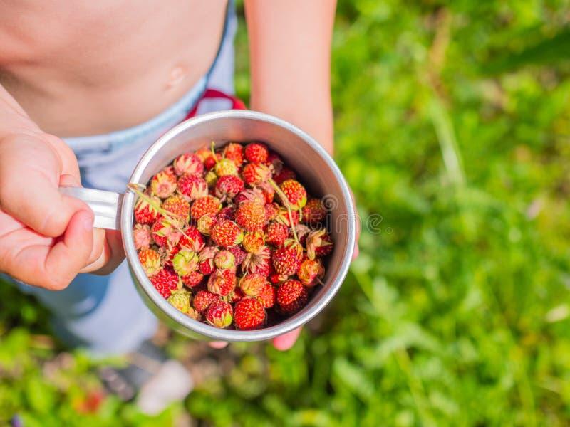 Ώριμα μούρα - φράουλα Δασική φράουλα μούρων Ένα αγόρι κρατά στο φλυτζάνι χεριών με τα δασικά μούρα στοκ φωτογραφίες με δικαίωμα ελεύθερης χρήσης