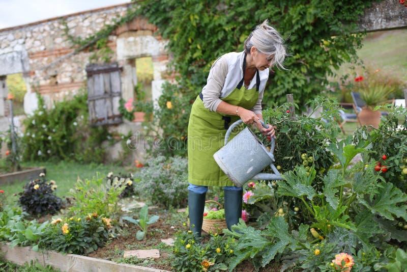 Ώριμα λουλούδια ποτίσματος γυναικών στον κήπο στοκ εικόνες