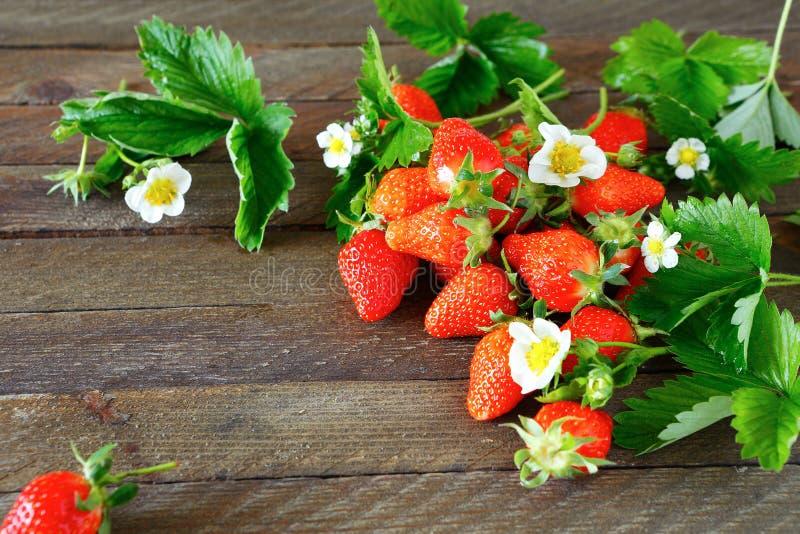 Ώριμα φράουλες, λουλούδια και φύλλα στοκ εικόνα