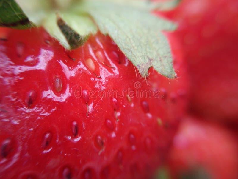 Ώριμα φρούτα φραουλών με πράσινο sepal, μακροεντολή στοκ εικόνες