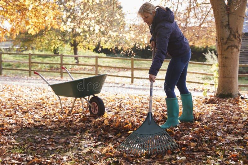 Ώριμη γυναίκα που μαζεύει με τη τσουγκράνα τα φύλλα φθινοπώρου στον κήπο στοκ φωτογραφία