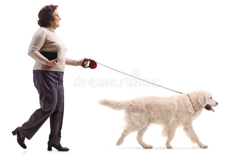 Ώριμη γυναίκα που περπατά ένα σκυλί στοκ φωτογραφίες