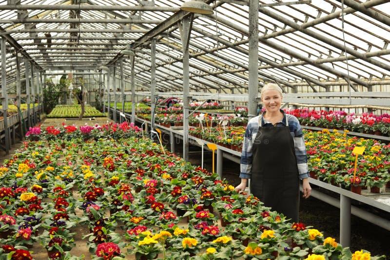 Ώριμη γυναίκα στο θερμοκήπιο μεταξύ των ανθίζοντας λουλουδιών στοκ εικόνες