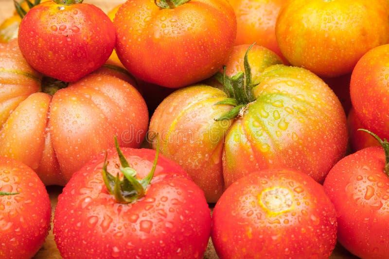 Ώριμη ντομάτα στο ξύλινο υπόβαθρο στοκ εικόνα με δικαίωμα ελεύθερης χρήσης