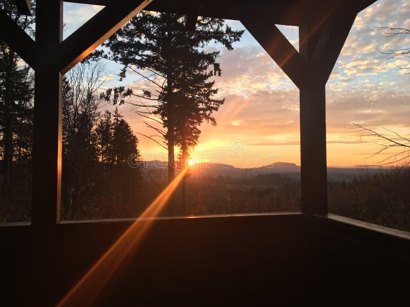 Ώριμη πιό forrest ξύλινη ηλιοφάνεια ήλιων στοκ φωτογραφία με δικαίωμα ελεύθερης χρήσης