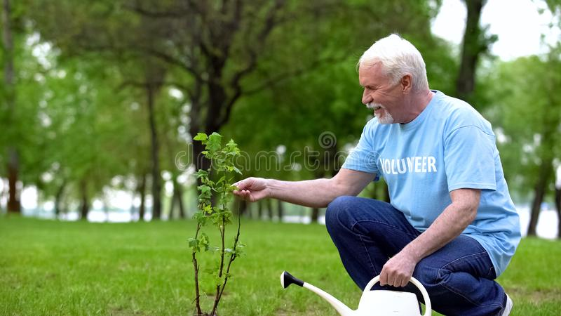 Ώριμος άνδρας που ποτίζει πράσινο φυτικό πάρκο, υπεύθυνος οικολογικός εθελοντής, αναδάσωση στοκ φωτογραφία με δικαίωμα ελεύθερης χρήσης