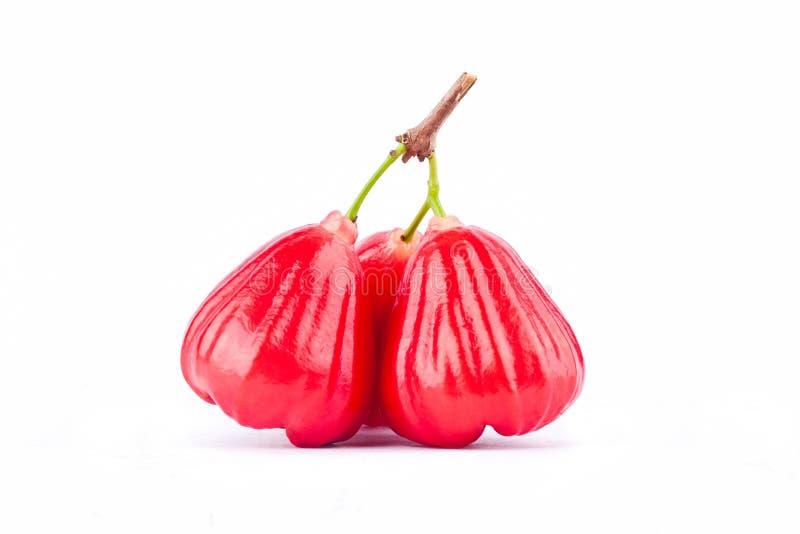 Ώριμος κόκκινος αυξήθηκε μήλο στο άσπρο υπόβαθρο υγιές αυξήθηκε τρόφιμα φρούτων μήλων που απομονώθηκαν στοκ φωτογραφίες