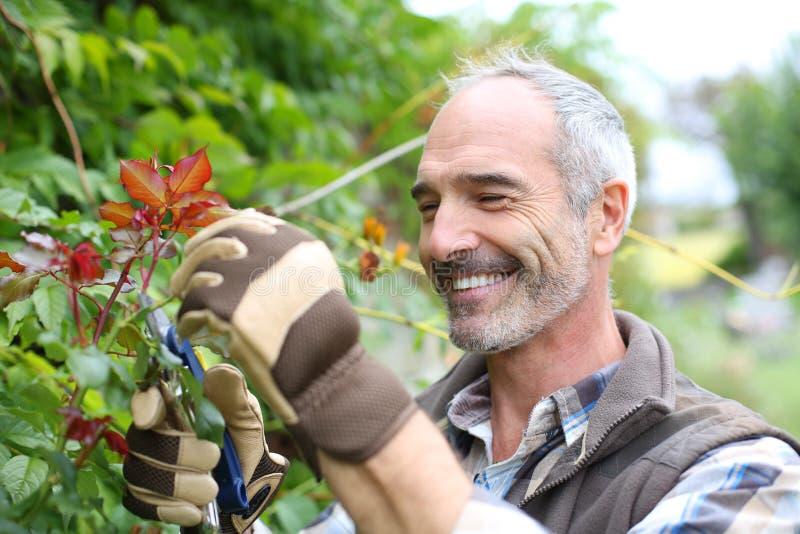 Ώριμο άτομο στον κήπο με τα γάντια και τις ψαλίδες στοκ εικόνα με δικαίωμα ελεύθερης χρήσης