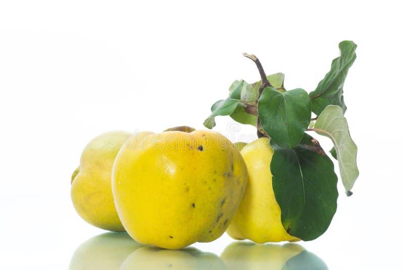 Ώριμο κυδώνι φρούτων που απομονώνεται στο άσπρο υπόβαθρο στοκ φωτογραφίες