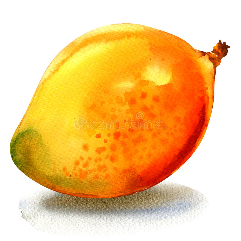Ώριμο νόστιμο γλυκό juicy μάγκο, ολόκληρα φρούτα, απεικόνιση watercolor στο λευκό ελεύθερη απεικόνιση δικαιώματος