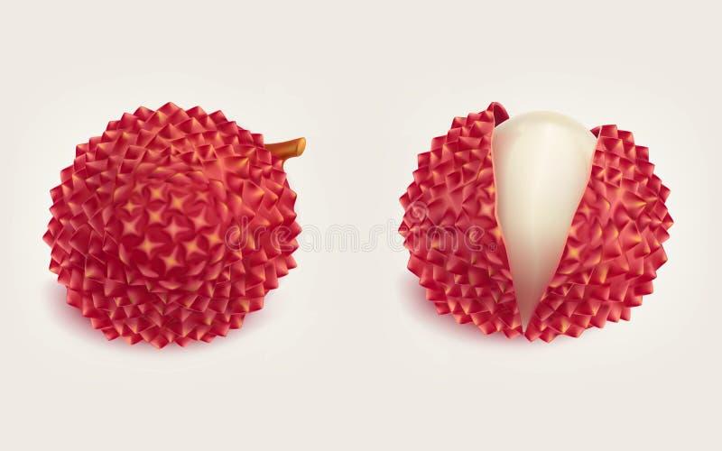 Ώριμο φρέσκο ρεαλιστικό διάνυσμα φρούτων λίτσι ελεύθερη απεικόνιση δικαιώματος