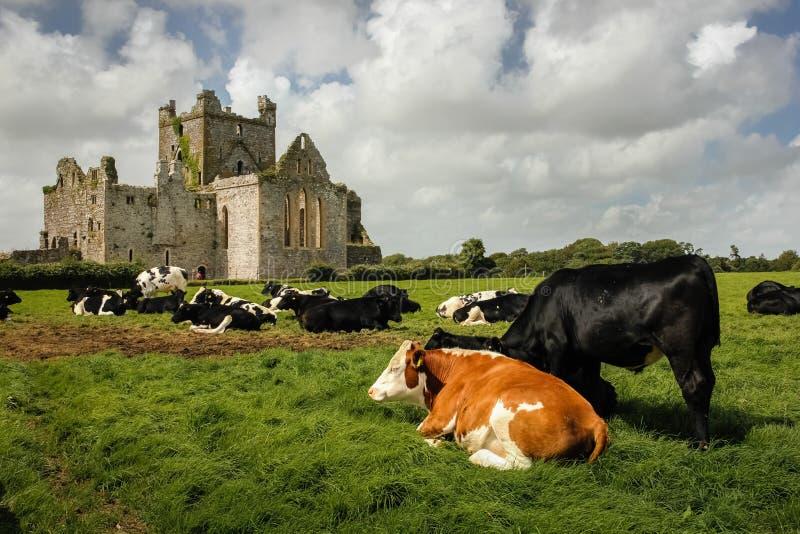 аббатство dunbrody графство Wexford Ирландия стоковое фото