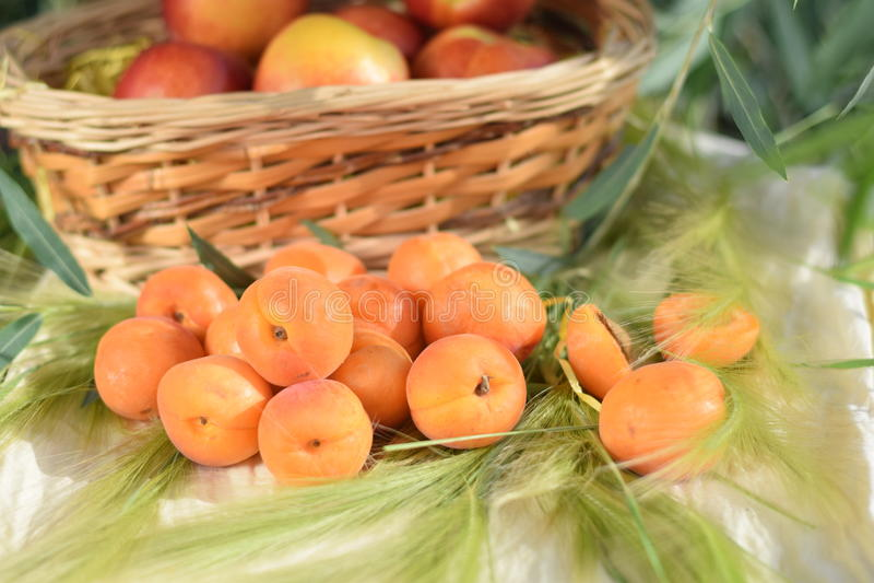 абрикосы зрелые стоковое изображение rf
