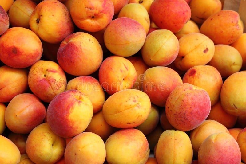 абрикосы стоковые фото