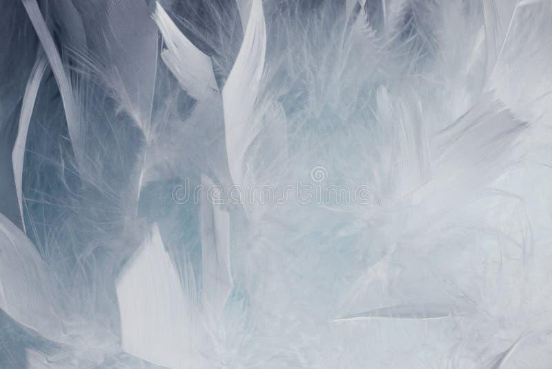 Абстрактная белая и черная предпосылка пер Текстура пастели стиля пушистого дизайна моды пера винтажная богемская стоковое изображение rf