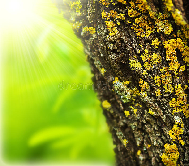 абстрактная весна пущи предпосылки стоковые изображения rf