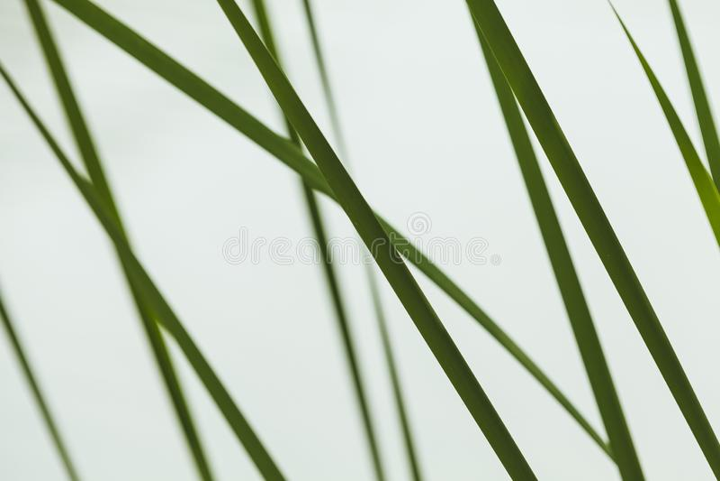 Абстрактная естественная предпосылка фото, трава стоковая фотография