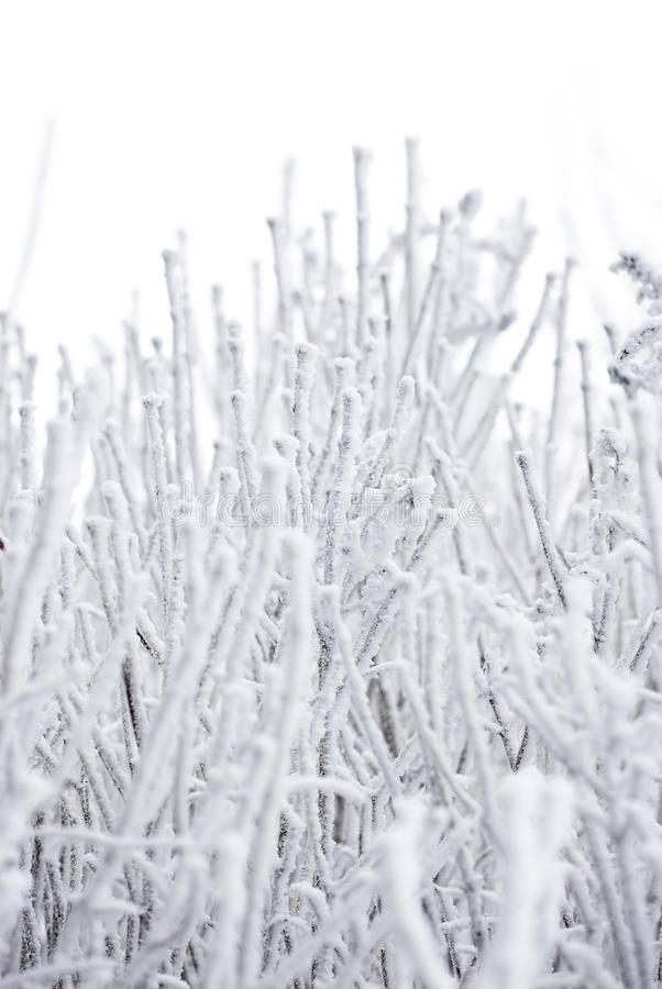 абстрактная зима стоковое фото rf