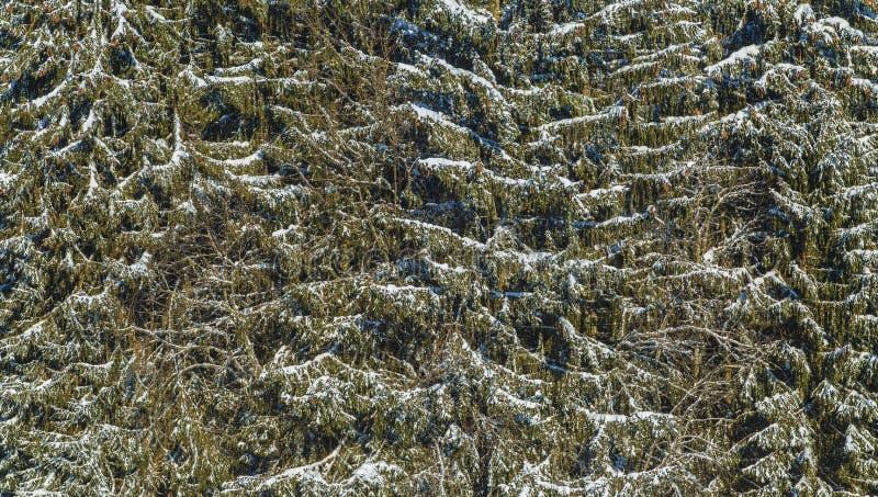 абстрактная зима стоковые изображения rf