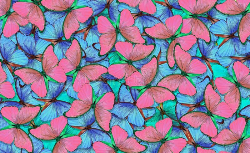 Абстрактная картина пинка и голубых бабочек Пинк и голубая естественная текстурная предпосылка Крылья бабочки Morpho Полет b иллюстрация штока