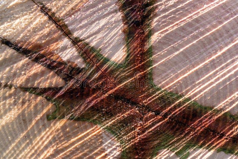 Абстрактная картина ствола дерева стоковое изображение